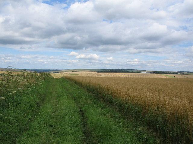 Track to Monkton Deverill