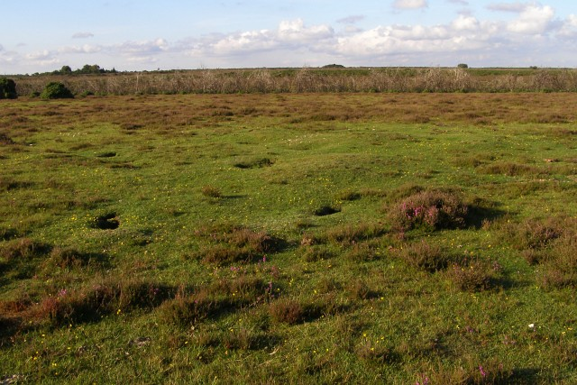 Rabbit activity in a round barrow (?), Beaulieu Heath, New Forest