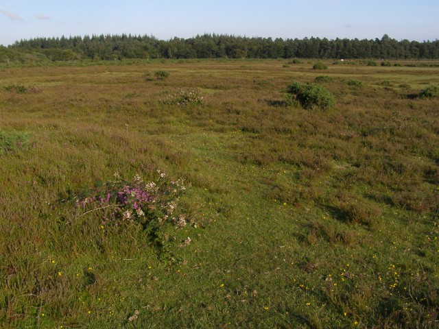 Round barrows on Beaulieu Heath, New Forest