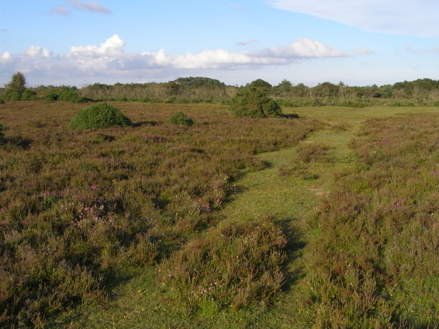 Path through the heather, Beaulieu Heath, New Forest