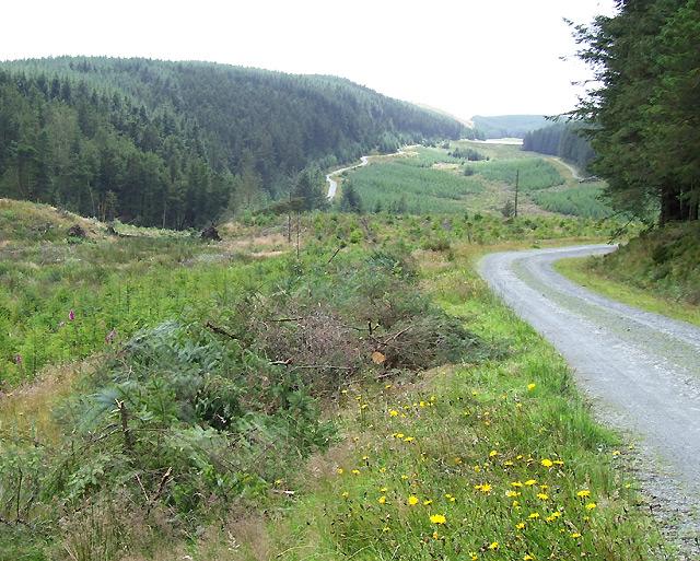Elenydd Forestry Landscape, Ceredigion