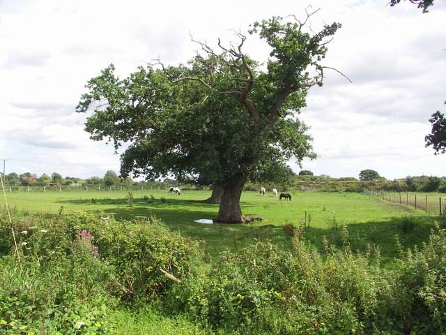 Pasture at Parley Green