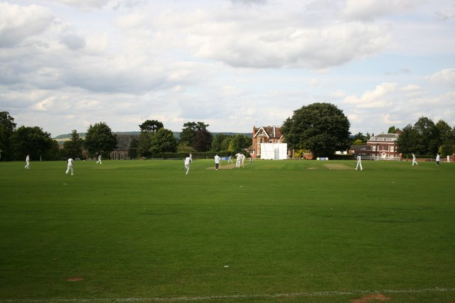 Cricket at the Vine