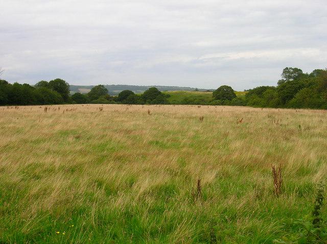 Field near Ninham Farm