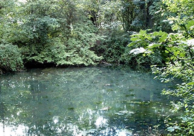 Pond - Parker's Grove