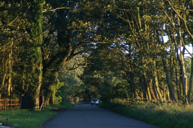 Trees at Formby Hall in late evening light.