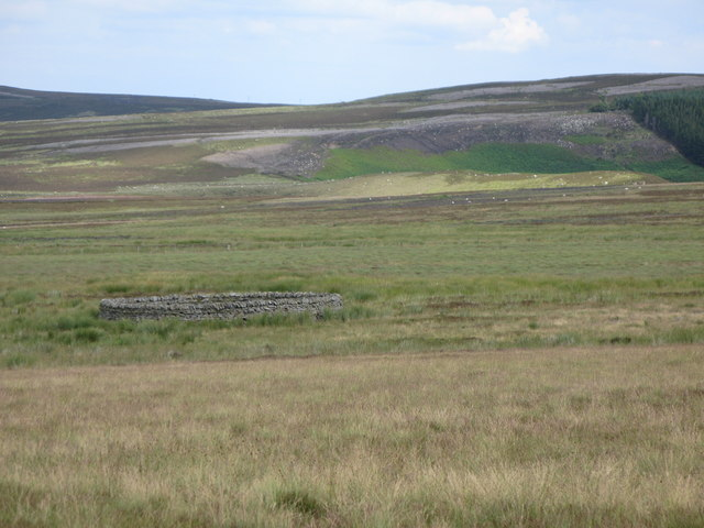 Harwoodshield Fell (4)