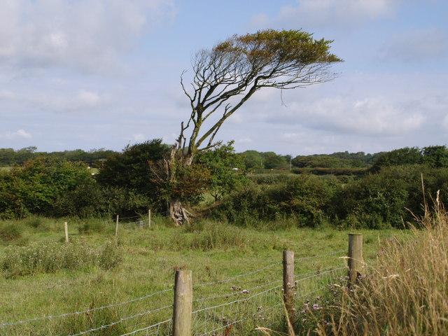 Tree near Worden