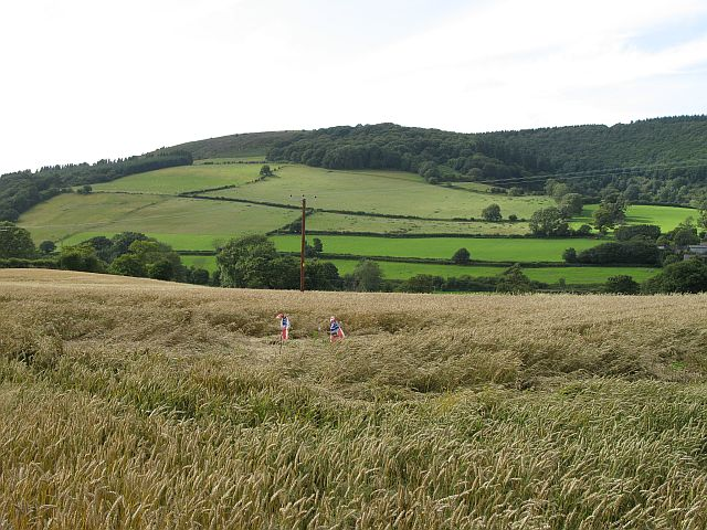 Teme Valley wheat