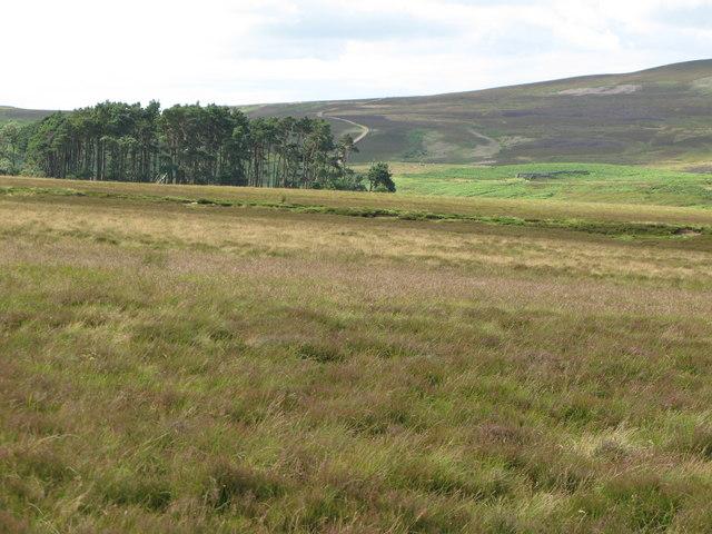 Plantation near Harwood Shield