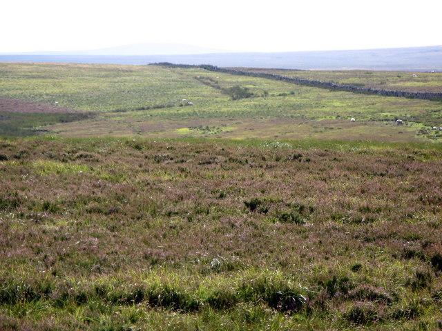 Heatheryburn Moor (2)
