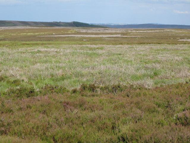 Moorland above Heatheryburn