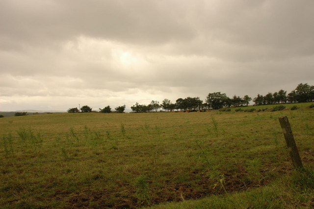 Field, fence and cows