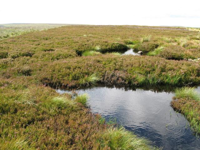Damp ground on Heatheryburn Moor