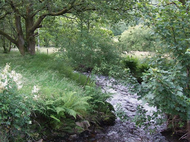 Mountain Stream, Carmarthenshire