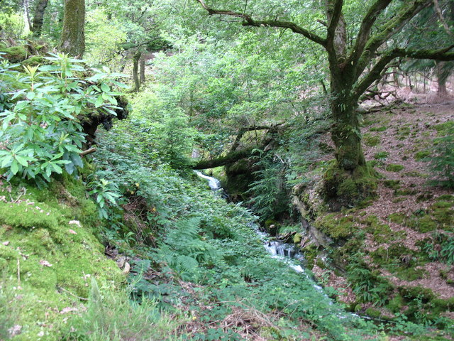 A fast flowing forest stream