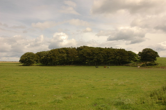 Field and trees by Meikle Tarty