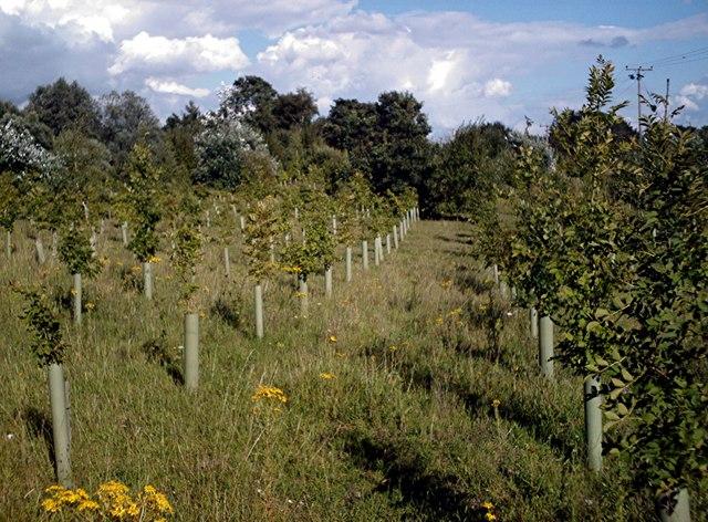 Regimented Planting