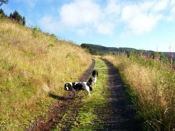 Track to Llwyn-y-neuadd