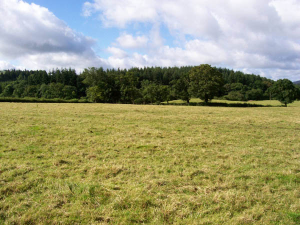 Pasture and Coed Caer Bedw