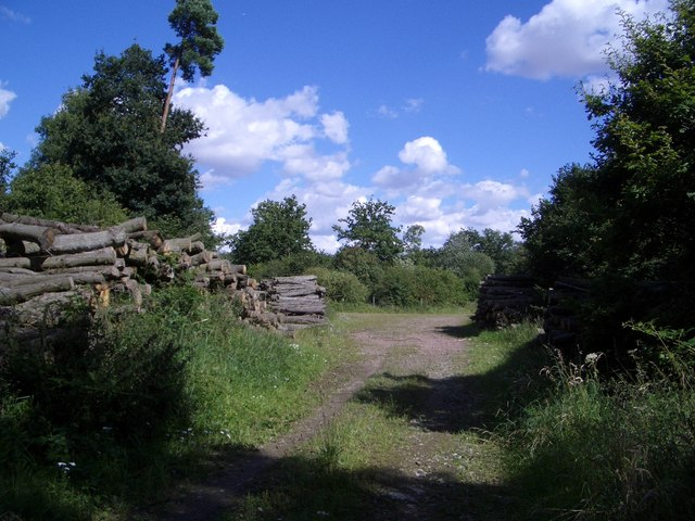 Woodland Tracks & Wood Piles in Titchmarsh Wood