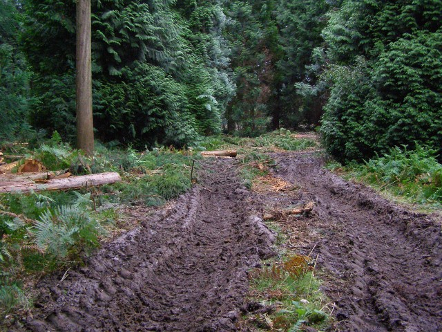 Muddy ruts, Denny Lodge Inclosure, New Forest