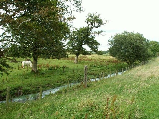 Grazing pony beside Dornock Burn