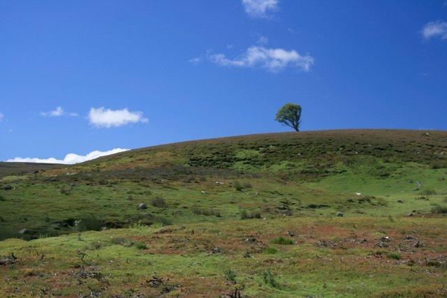 Hirst Ridge