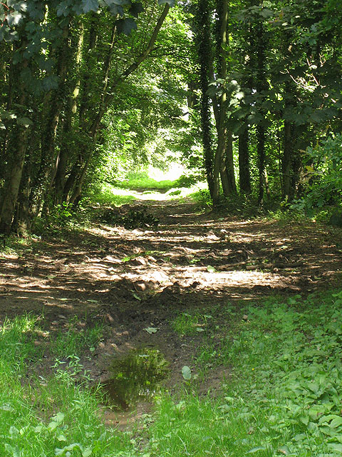 Track through woods on Marble Hill
