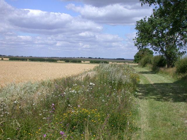Insect-friendly field margin at Morden Grange Farm