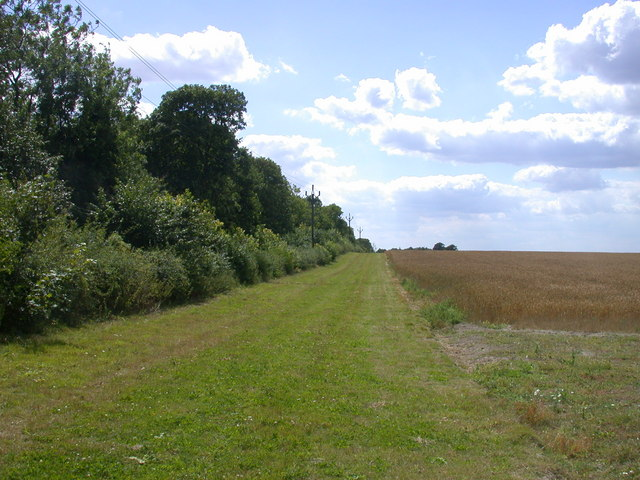 Track and tree-line towards Highfield Farm