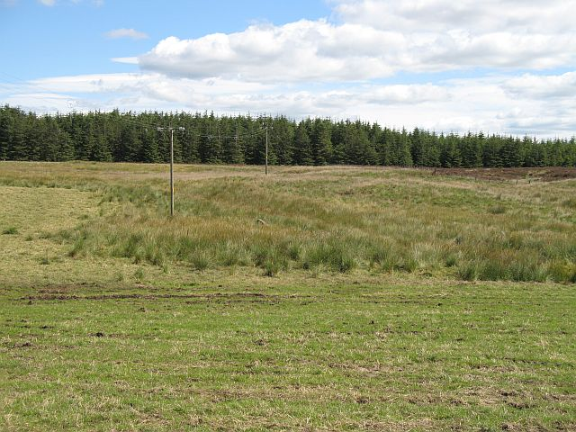 Stallashaw Moss