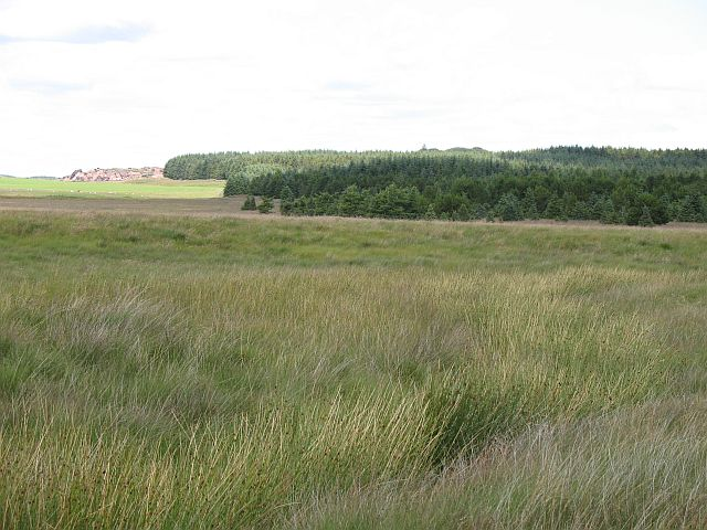 Plantation, Greenfield Burn