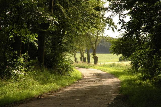 Farm road to Milton of Ardlethen
