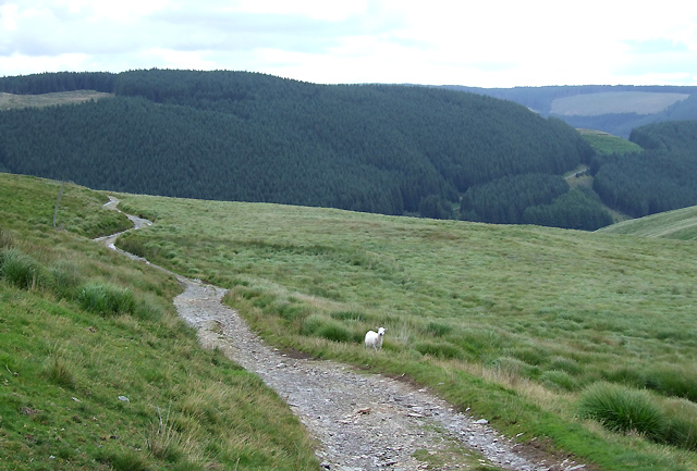 Drovers' Road, and Forestry on Bryn Mawr, Ceredigion