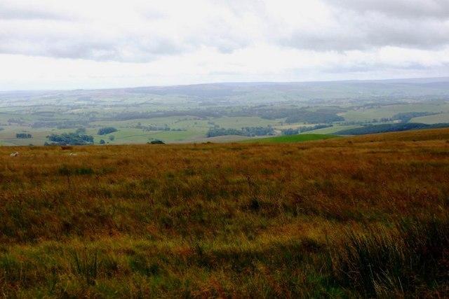 Moorland Grass