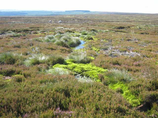 Bollihope Moor