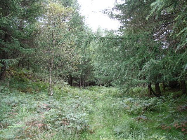 A woodland glade