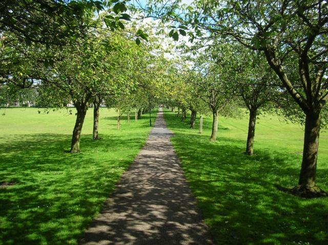 Cherry Tree Walk
