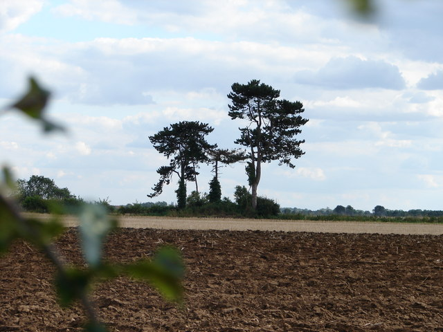 Trees on Saxby Cliff