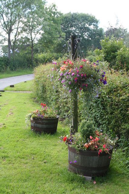 Wayside Flora