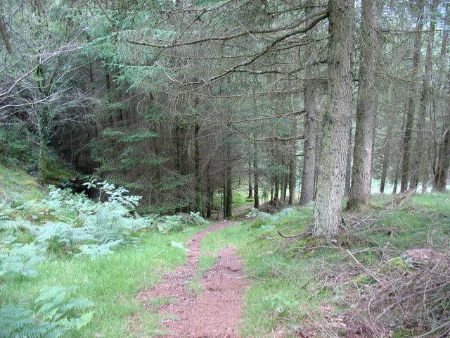 What every forest public footpath should be like...neither overgrown nor  over-engineered