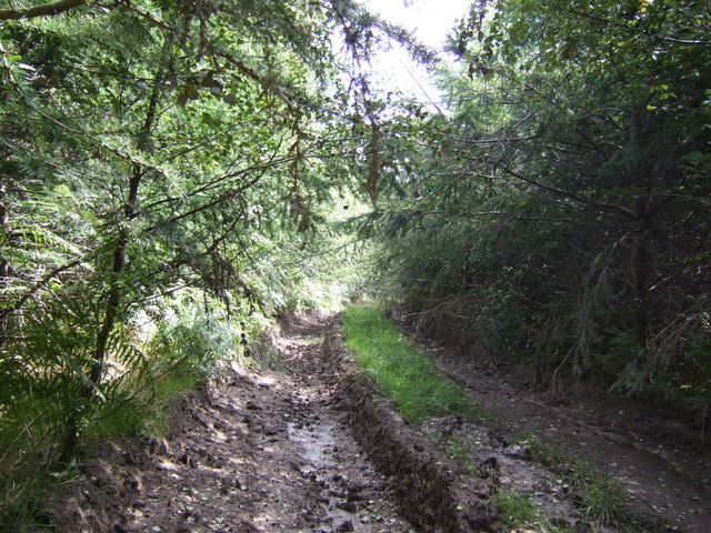 Forestry track; Neenshill Coppice