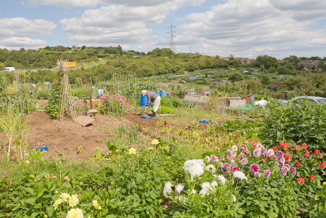 Red Barn Allotments, Danes Road, Portchester