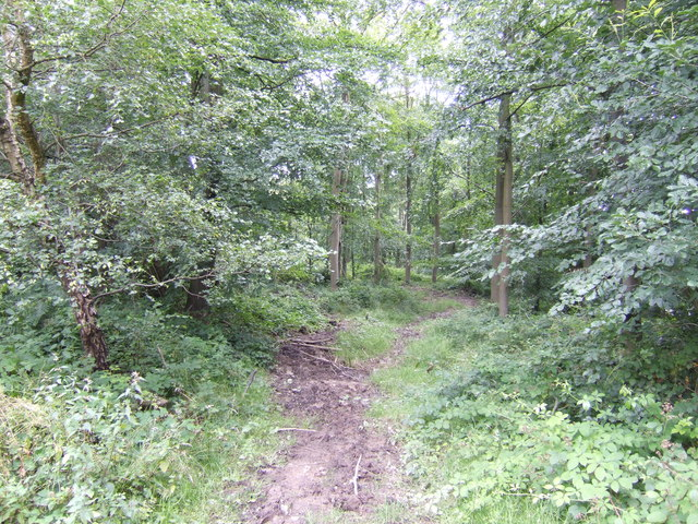 Footpath through Fasting's Coppice