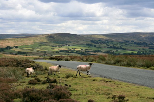 Road Over Commondale Moor