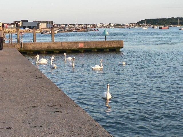 Mudeford: swans and beach huts