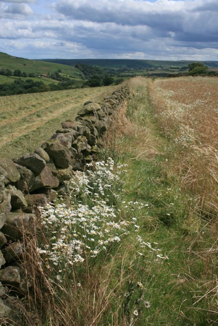 Footpath, Westgate Farm to Thornhill Farm