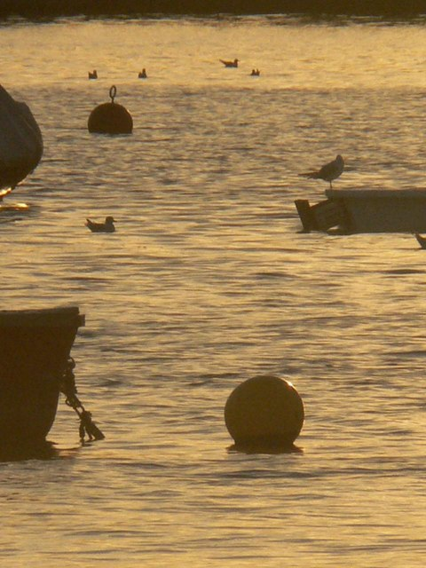 Buoys and gulls