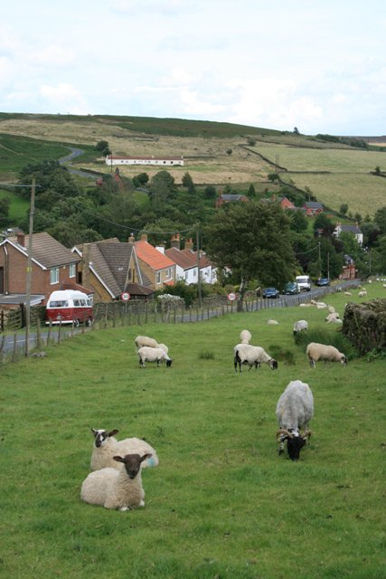 Sheep and Cottages on Potter's Side Road